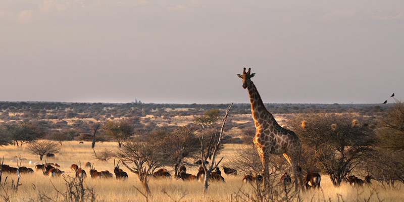Jan Oelofse Hunting Safaris