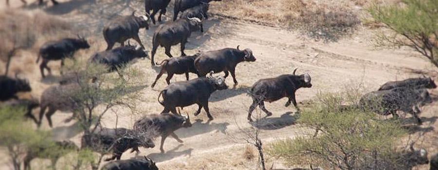 Melorani Safaris