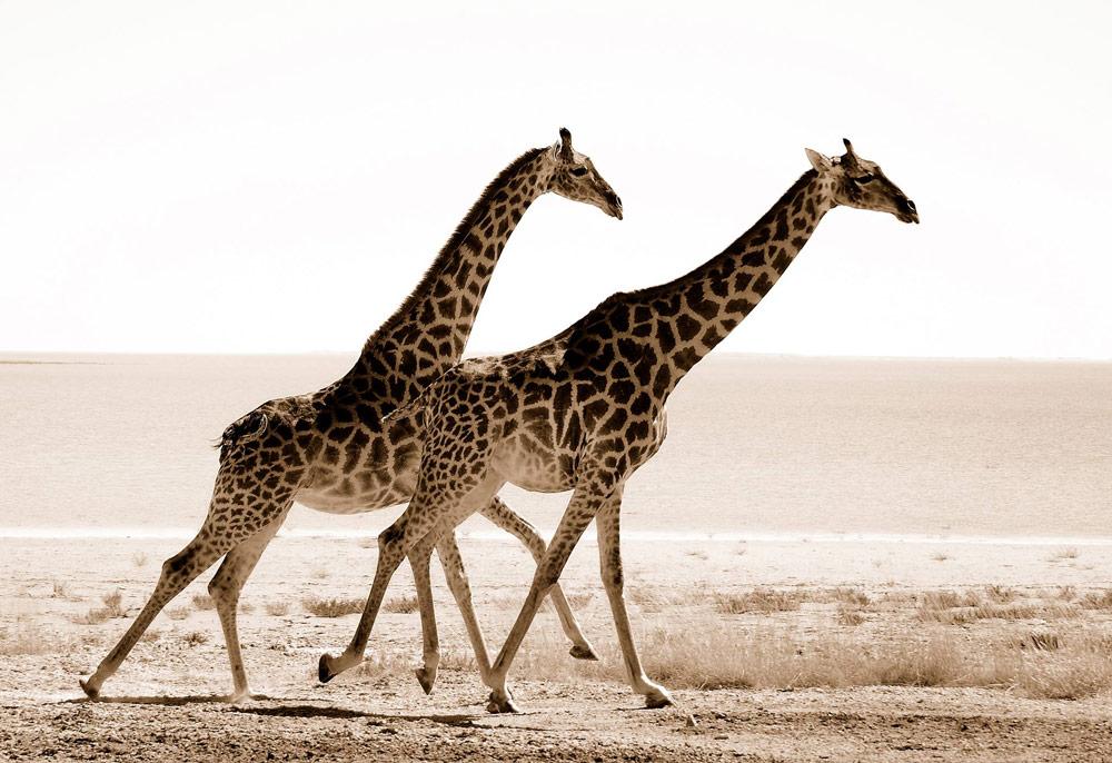 Schoenfeld Safaris